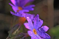 blomst_8329